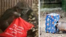 서울동물원, 수고한 동물들에게 22일 크리스마스 선물