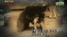 술· 담배 즐기는 '곰'이 1위?… 2차세계대전 참전 '보이텍'