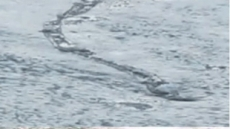 호수 괴물 정체 밝혀져… '낚시 그물이나 헝겊 조각?'