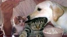'우리 엄마 먹지마'…고양이들 살아있는 표정 '폭소'