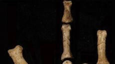 미확인 신종 인류 …350만년 전 나무타기 능숙