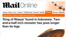 '곤충 잡아먹는' 괴물 말벌 발견, 크기는 '충격'