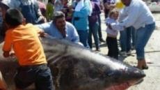 6m 초대형 백상어 '경악'…이만하면 괴물 물고기?