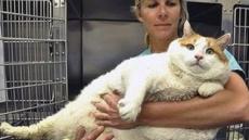 """18kg 뚱보 고양이 """"고양이 맞다구요"""""""