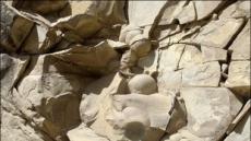 6000만년 전 공룡알, 체첸서 무더기 발견