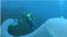 """30미터 바다 괴물 """"초대형 개불? 광케이블?"""""""