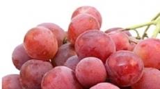 살찌는 과일 중 최고는 거봉