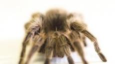 신종 동물 발견…새 잡아먹는 거미까지