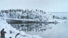 '남극의 신사' 펭귄의 충격적 성생활…'경악 그 자체'