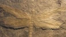 3억년 전 잠자리…거대곤충 잠자리 크기가 줄어든 이유 보니