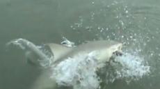 뜰채로 물고기 잡는 순간, 바다서 상어 튀어나와 '강탈'
