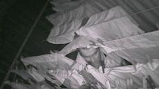 매일밤 女속옷 훔쳐가던 男, CCTV포착