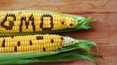 GMO 표시제, 소비자 부담은 연간 2.3달러?