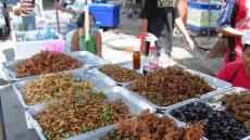식용 곤충, 식량난 해결할 고단백 영양식?