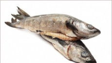 뛰는 생선, 지구촌 식탁물가 위협…양식, 자연산 첫 추월