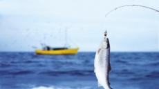 고등어·태평양 넙치·정어리…많이 먹어야 환경 살리는 생선입니다