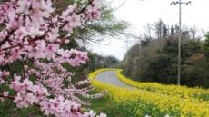벌써 봄타령…여행사,지자체 '꽃여행'戰 돌입