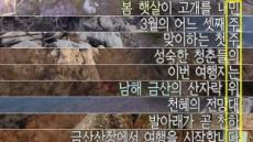 朴 파면 후 SBS가 띄운 역대급 '자막 세로 드립'