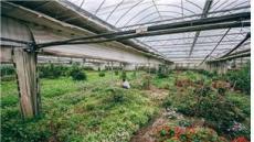 [국가대표 스타팜]생소한 작물 재배 선구자…국내 최초 유기농인증-엔젤농장(대표 안승환)