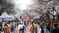 여의도 봄꽃축제, 이번주 개막