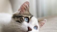 주인 없는 원룸서 발생한 화재, 범인은 고양이?