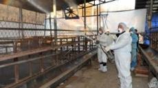 돼지 구제역 진정단계?…백신 항체형성률 82%로 상승