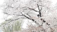 꽃피는 4월, 연인·가족과 함께할 경기도 꽃 축제 6선