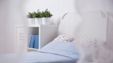 침대 옆 호접란ㆍ책상 위 로즈마리…'그린'이 주는 특별한 치유