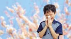 [코 때리는 봄  ①] 꽃바람 타고 왔다…코를 간질이는 그 녀석!