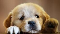 미세먼지 대공습, 우리 강아지도 위험하다