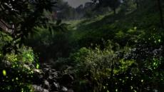 [단신] 곤지암 화담숲 반딧불이 축제 15일 개막