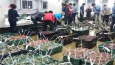 인천 꽃게 어획량 '회복'… 작년 대비 180% 증가