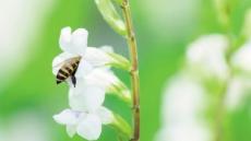 동물성 식품 안 먹는 비건, 꿀까지 안 먹는 이유