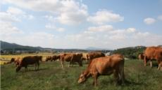청탁금지법 300일, 낮아지는 쇠고기 자급률…한우산업 위축 심화