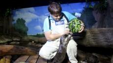 물속 해양 동물도 여름 보양식 먹는다