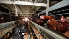 살충제 계란 공포 확산…경기 포천서 추가 발견