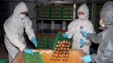 [살충제 계란 쇼크 ②] 새로 검출된 살충제, 피프로닐보다 독성 낮지만 간 손상 '위험'