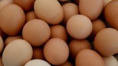 강원도, 계란농장 조사대상 47곳 중 1곳만 문제