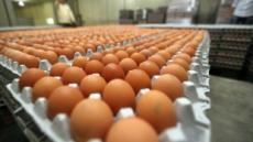 '살충제 계란' 사태에 판매량은 물론 가격까지 하락세