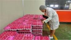 '살충제 계란' 재발 막는다…정부, 살충제 계란 검사항목 확대