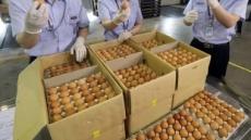유통업자 배만 불린 '朴정부' 계란 수입 정책