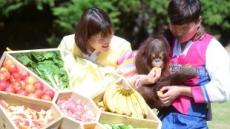 [헤럴드포토] '행복한 오랑우탄…'
