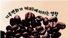 열받은 지구 앞에 줄어드는'베트남 커피'