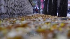 [가을 '골칫거리' 박멸 작전②] 남이섬 '낭만 가득' 은행잎…연출이었어요?