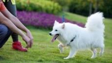 [연중기획-작은 배려, 대한민국을 바꿉니다] 작은 개는 괜찮다?…목줄 풀린 '펫티켓'에 커지는 공포