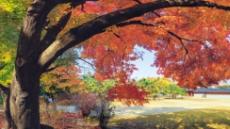 마지막 단풍이 소리치는 11월 도심…가을과 작별하며…