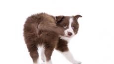 [반려견과 해피동거] 우리 강아지 특기는 꼬리 쫓기?…마음부터 살펴주세요