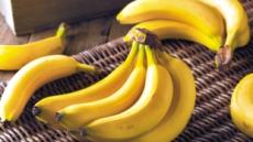 멸종위기 바나나…우리는 언제까지 먹을수 있을까