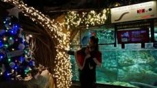 전기뱀장어 크리스마스 트리 점등식, 원리는?