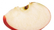 요맘때'꿀맛'사과…내 몸엔'황금'사과